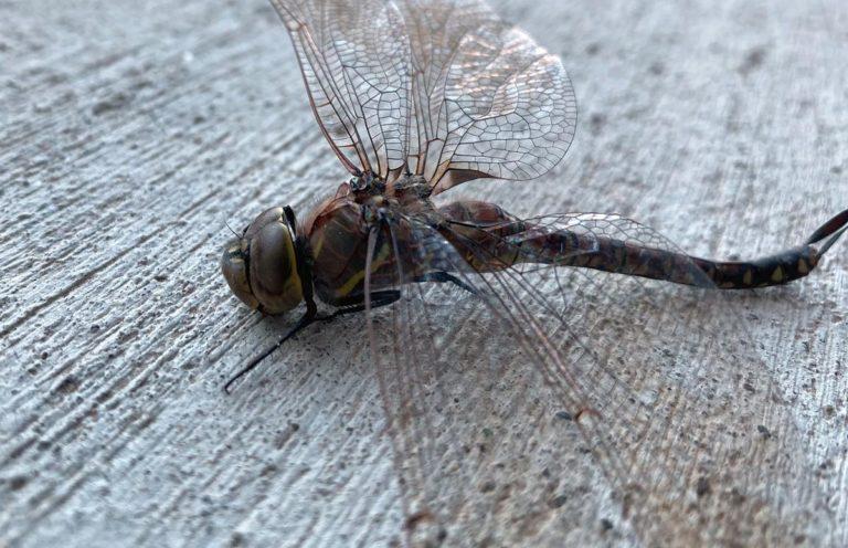 Niech walka z insektami lub robakami okaże się skuteczna