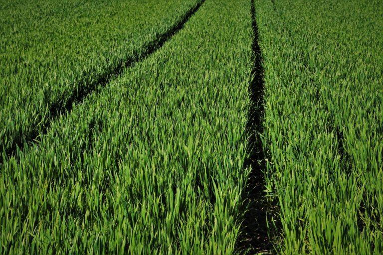 Czy z rolnictwa da się zarobić?